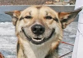 smilingdog