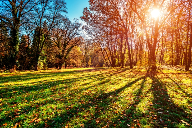 Fall istock
